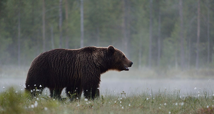 progetto-orso-marsicano_728x390