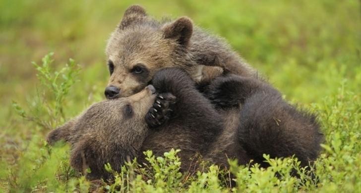 animali a rischio di estinzione in Italia