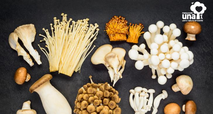 la raccolta dei funghi